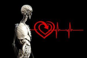Anatomy 2328534 640 300x200